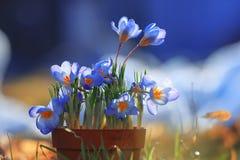 Tender wild spring flowers Royalty Free Stock Image
