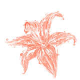 Tender wine colored lily Stock Photography