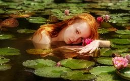 Tender young redhead woman Ophelia floats sensually seductively in the water, lake, pond, marsh and playing with waterlilies. Tender young redhead woman Ophelia stock photography