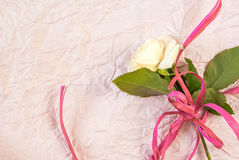 Tenderly pink rose Royalty Free Stock Images