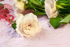 Tenderly pink rose Stock Photos