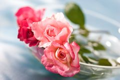 Tenderness. Still life with tenderness roses on the blue silk stock photo