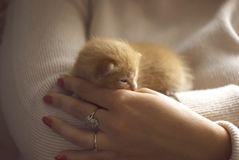 Tenderness Royalty Free Stock Photo