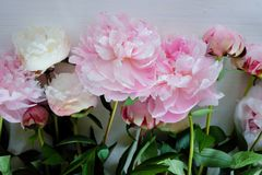 Tenderness bouquet of pink and white peonies Stock Photo