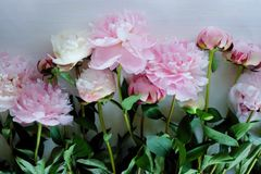 Tenderness bouquet of pink and white peonies Royalty Free Stock Photography