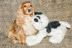 Tenderness dog royalty free stock photography
