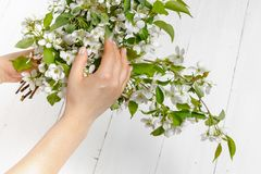 Tenderness female hands with spring flowers. Concept of tenderness, skin care, the hands of the girl hold spring flowers stock images