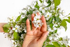 Tenderness female hands with spring flowers. Concept of tenderness, skin care, the hands of the girl hold spring flowers stock image