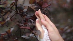 Tenderness stock video