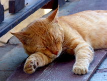 The tenderness of a stray cat Kos Island Greece Europe. Stray cat having a sleep Kos Island Greece Europe Stock Images