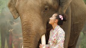 Tenderness of young attractive asian woman in traditional costume with elephant. stock footage