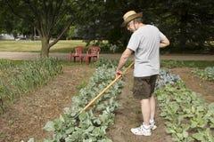 Tending the garden. Gardener tending and weeding plants in the garden Royalty Free Stock Photography