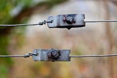 Tenditori del metallo fotografia stock