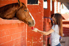 Tendo o divertimento e alimentando meu cavalo Fotografia de Stock Royalty Free