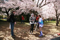 Tendo o divertimento sob as árvores de Cherry Blossom Imagem de Stock Royalty Free