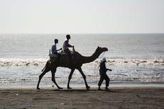 Tendo o passeio no camelo Imagens de Stock