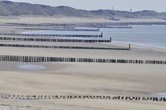 Caminhada solitária na praia Imagens de Stock Royalty Free