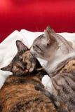 Tendresse de Kitty Images libres de droits