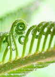 tendril Arkivbilder