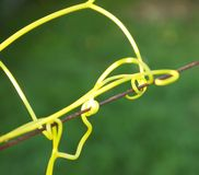 Tendril Image stock