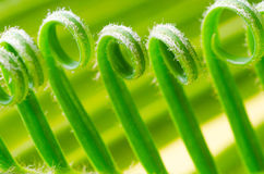 Tendril of plant Stock Images
