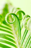 Tendril of plant Royalty Free Stock Photos