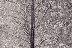 Tendrils growing on a granite stone Stock Images