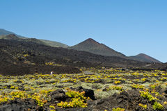 Teneguia volcan område, LaPalma ö Royaltyfri Bild