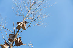 Tenement wooden houses for birds Royalty Free Stock Images