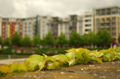 Tenements in berlin Royalty Free Stock Images