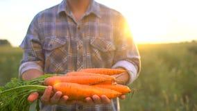 Tenencia del granjero en el producto orgánico biológico de las manos de zanahorias El mercado del granjero del concepto, agricult almacen de video