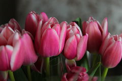 Tenerezza di fioritura Fotografia Stock