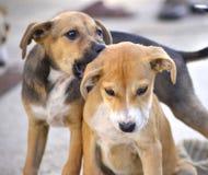 Tenerezza di mattina del ` s del cane Immagine Stock Libera da Diritti