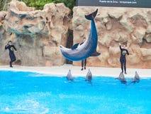 Tenerife, ΙΣΠΑΝΙΑ - 3 ΦΕΒΡΟΥΑΡΊΟΥ 2019: Καλλιτεχνικός παρουσιάστε με έναν εκπαιδευτή και τα δελφίνια στο πάρκο Loro Parque, Tener στοκ φωτογραφία