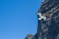Tenerife μπλε ωκεανός και γλάρος Μεγάλοι απότομοι βράχοι και ήλιος Στοκ φωτογραφίες με δικαίωμα ελεύθερης χρήσης