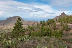 Tenerife πάρκο Στοκ φωτογραφία με δικαίωμα ελεύθερης χρήσης