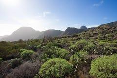 Tenerife Stockfotografie