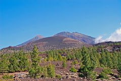 Tenerife. The famous national park of tenerife Royalty Free Stock Image