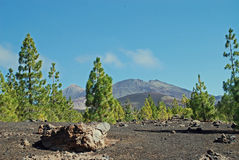 Tenerife Royalty Free Stock Photography
