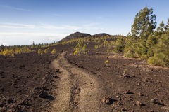 Tenerife. Trail in the Teide National Park, Tenerife, Canary Islands, Spain stock photography