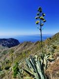 Tenerife Obraz Stock