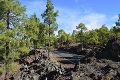 Tenerife Fotos de archivo libres de regalías