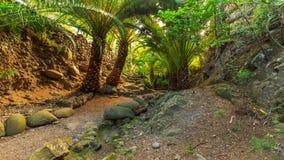 Tenerife Fotografie Stock