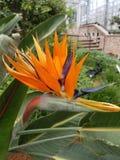 Tenerife, Canarische Eilanden stock foto