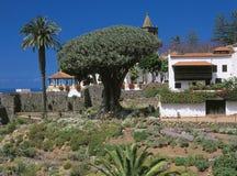 Tenerife, Canarische Eilanden, Spanje royalty-vrije stock afbeelding