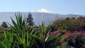 Tenerife, Canarische Eilanden, Spanje Stock Afbeelding