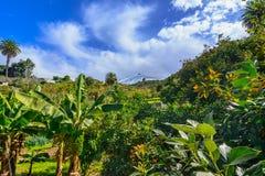 Tenerife, Canarische Eilanden, Spanje: Mooi landschap van green Royalty-vrije Stock Fotografie