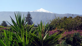 Tenerife, Canary Islands, Spain Stock Image