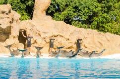 TENERIFE, ESPAÑA - 19 DE NOVIEMBRE DE 2015: Muestre con los delfínes en el p Foto de archivo libre de regalías