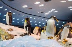TENERIFE, ESPANHA - 19 DE NOVEMBRO DE 2015: Pinguins no artificial fotos de stock royalty free